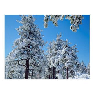 Schneebedeckte Bäume in den Laguna-Bergen Postkarte