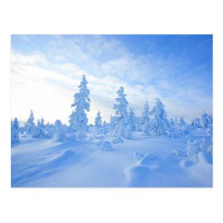 schneebedeckte Bäume in Lappland in Finnland Postkarte