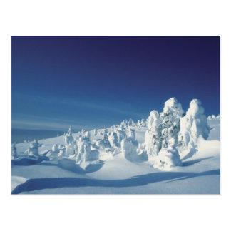 Schneebedeckte Bäume Postkarte