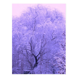 Schneebedeckter Baum Postkarte