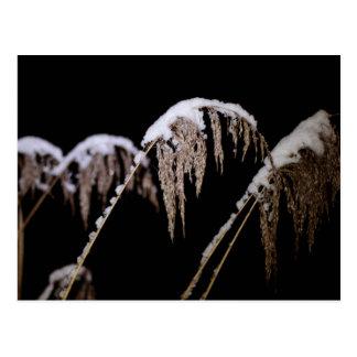 Schneebedecktes Gras Postkarte