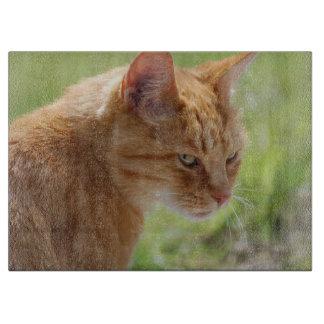 Schneidebrett Katze - Foto von Jean-Louis Glineur