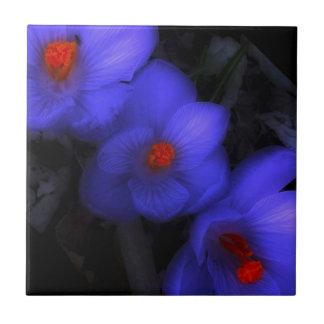 Schöne blaue lila Krokus-Blüte Fliese