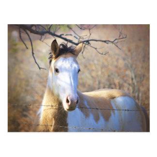Schöne Farben-Pferdepostkarten Postkarte