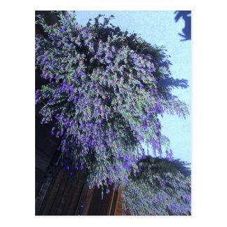 Schöne lila blühende Strauch-Postkarte Postkarte