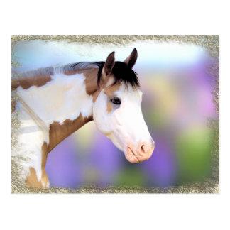 Schöne Pferdepostkarten Postkarte