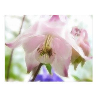 Schöne rosa Blumenblätter - Aquilegia Postkarte