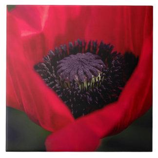 Schöne rote Mohnblumen-Blumen-Blüte Fliese