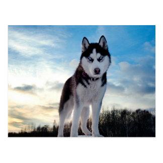 Schöner heiserer Hund Postkarten