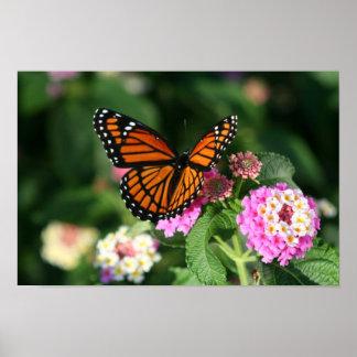Schöner Monarch-oder Vizekönig-Schmetterling Poster