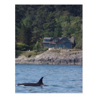 Schöner Mörder-WalOrca in Washington-Staat Postkarte
