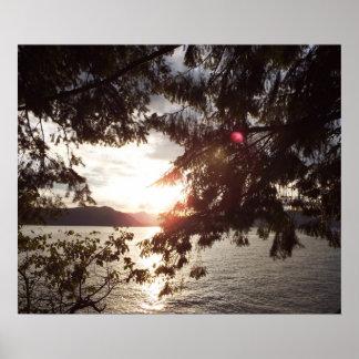 Schöner Sonnenuntergang durch Baumaste Poster