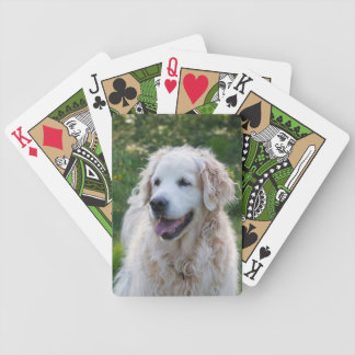 Schönes Foto des goldenen Retrievers Hunde, Pokerkarten