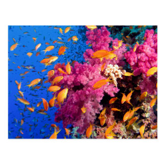 Schönes Korallenriff Naturescape Postkarte