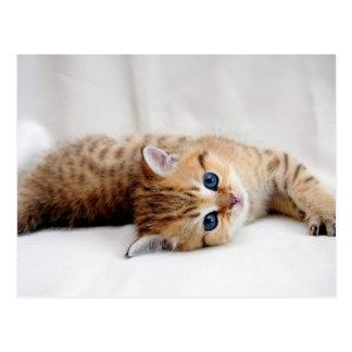 Schönes orange Tabbykätzchen mit blauen Augen Postkarte