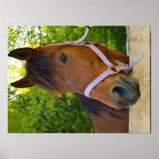 Schönes Pferd Poster