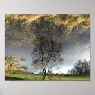 Schönes Reflexions-Fotografie-Baum-Plakat Poster
