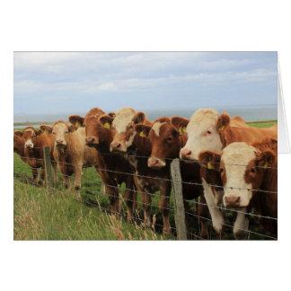 Schottische Kuh Grußkarte