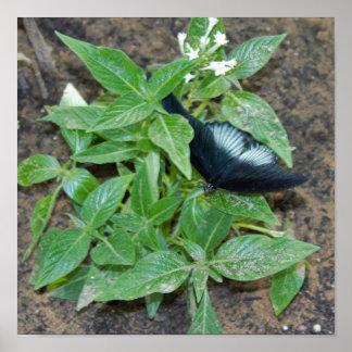 Schwarz-weißer Schmetterling auf Pflanze Poster
