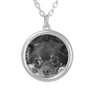 Schwarze Chihuahua Versilberte Kette