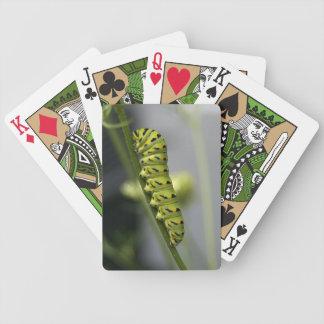 Schwarze Frack-Raupe (parsleyworm) auf verdünntem Bicycle Spielkarten