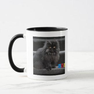 Schwarze Katze, die auf Treppe durch Gebäudeblöcke Tasse