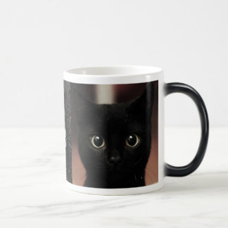 Schwarze Katzen Verwandlungstasse