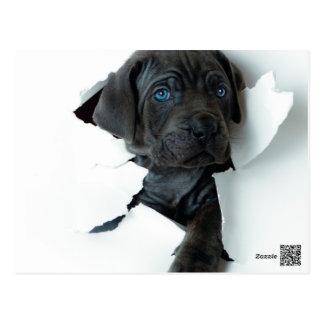 Schwarzer Hund des neapolitanischen Mastiff, der Postkarte