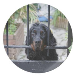 Schwarzer Hund hinter dem Zaun, Bretagne, Flacher Teller