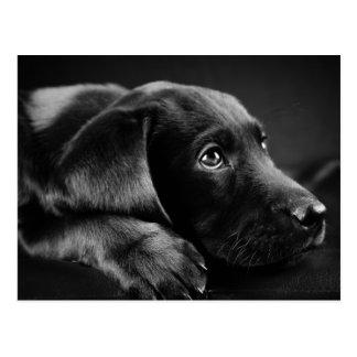 Schwarzer Labrador auf einer schwarzen ledernen Postkarte