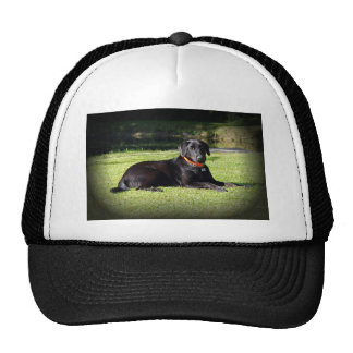 Schwarzer Labrador Baseball Kappe