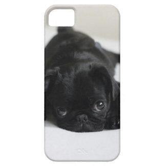 Schwarzer Mops-Welpe iPhone 5 Cover