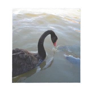 Schwarzer Schwan, der durch Fische angegriffen Notizblock