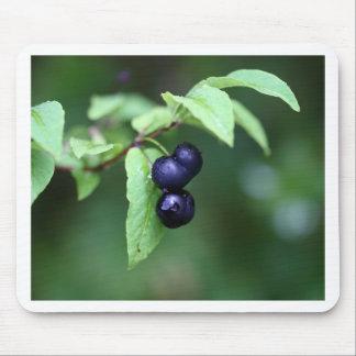 Schwarzes berried Geißblatt (Lonicera Nigra) Mauspads