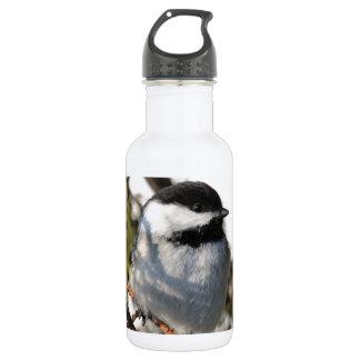 Schwarzes mit einer Kappe bedeckter Chickadee Trinkflasche