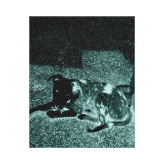 Schwarzes u. weißes Hündchen Gespannter Galeriedruck