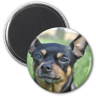 Schwarzes und Brown-Chihuahua-Magnet Runder Magnet 5,1 Cm
