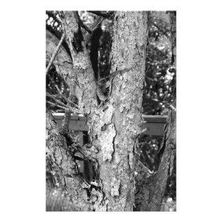 Schwarzweiss-Baum-Natur-Foto Briefpapier
