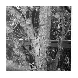 Schwarzweiss-Baum-Natur-Foto Fliese