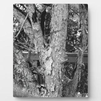 Schwarzweiss-Baum-Natur-Foto Fotoplatte