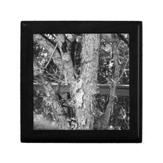 Schwarzweiss-Baum-Natur-Foto Geschenkbox