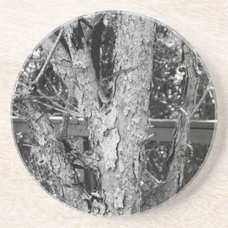 Schwarzweiss-Baum-Natur-Foto Getränkeuntersetzer