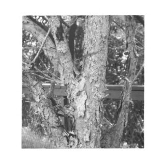 Schwarzweiss-Baum-Natur-Foto Notizblock