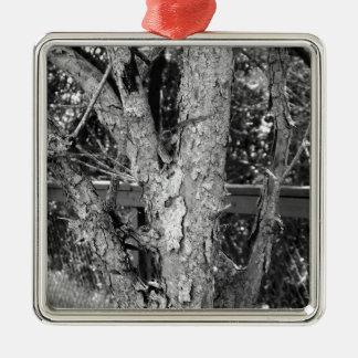 Schwarzweiss-Baum-Natur-Foto Silbernes Ornament