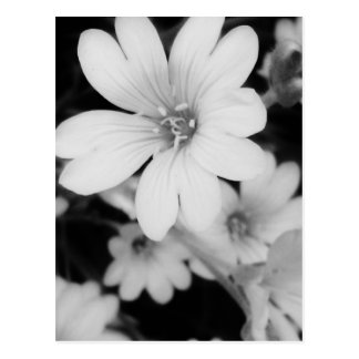 Schwarzweiss-Blume Postkarte