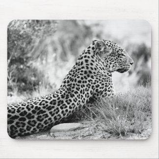 Schwarzweiss-Foto des Leopardschauens Mousepad