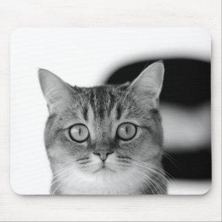 Schwarzweiss-Katze, die gerade Ihnen betrachtet Mousepads