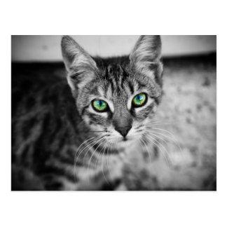 Schwarzweiss-Katze mit glänzenden Augen Postkarten