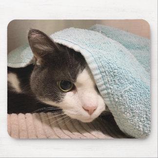 Schwarzweiss-Katze unter Tuch Mousepad