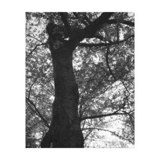 Schwarzweiss-Kirschblüten-Baum-Druck Gespannter Galerie Druck